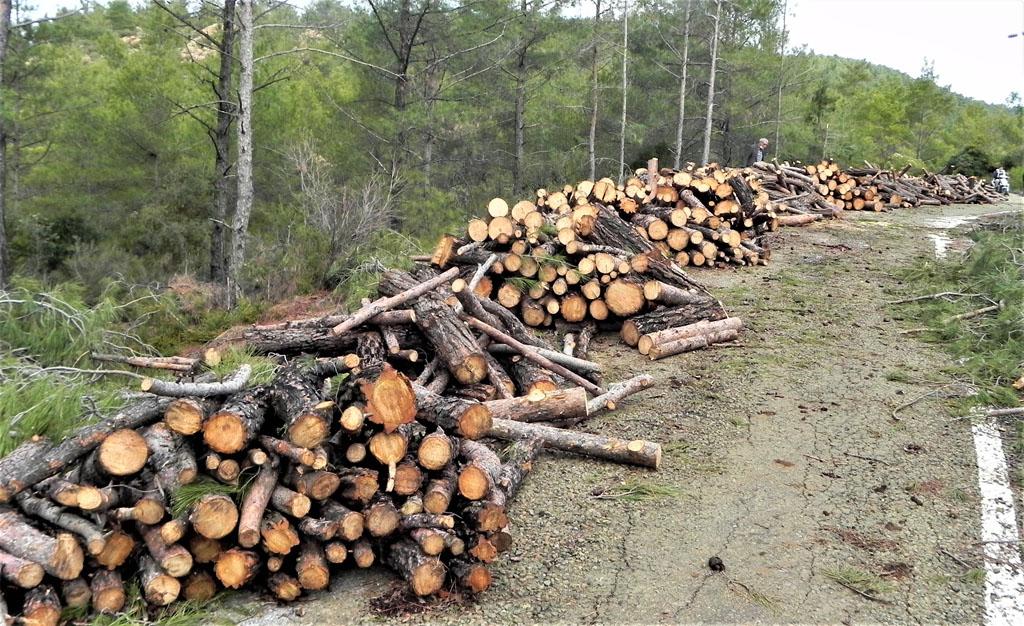 Balan Dağı Ağaç Katliamı